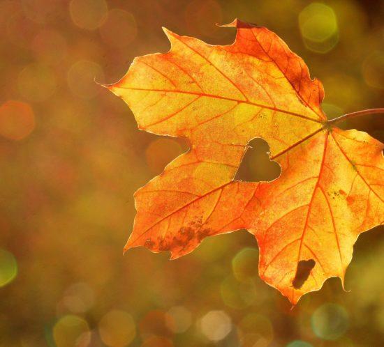 Energie-de-l'automne